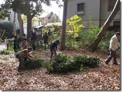 ⑤住宅に近い樹木の剪定と枝の纏め