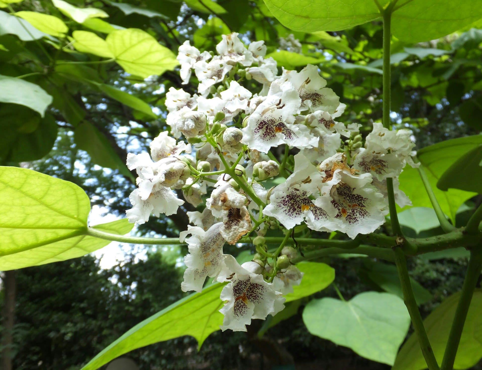 ウチョウラン、睡蓮、蓮の花 - ...