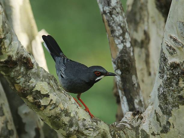 鳥には世界がどう見えている? 人間にはない驚き …