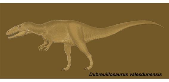 ドゥブレウイロサウルスは、ジュラ紀中期バス期にフランスのノルマンディー... メガロサウルス科