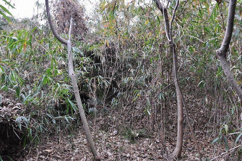 ものすごい薮に覆われた巨勢山323号墳の墳丘