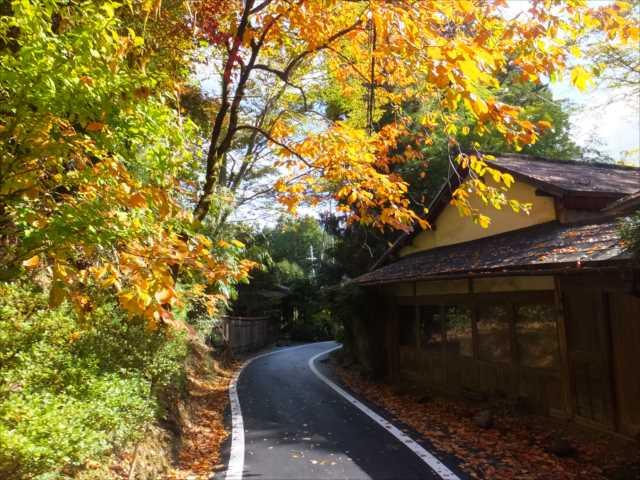 京大坂道の画像 p1_21