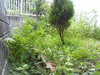 オマケのジャングル伐採ビフォーアフター