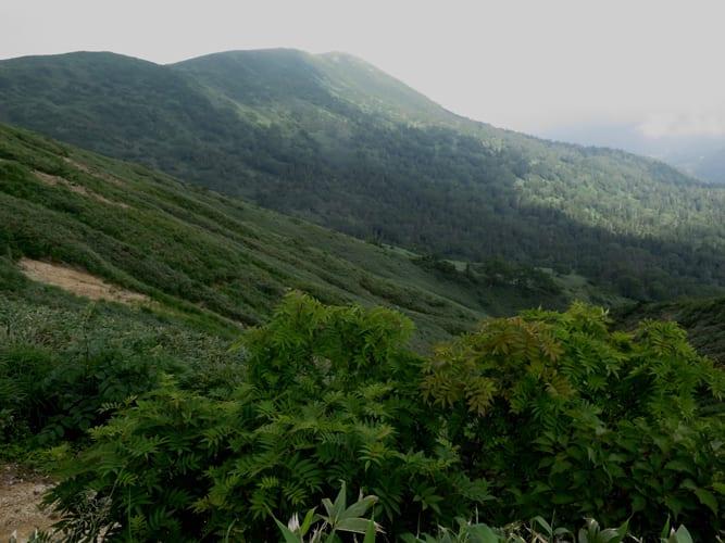 刈り払い@裏岩手縦走路 大深岳〜八瀬森分岐 - すーさんの山日記