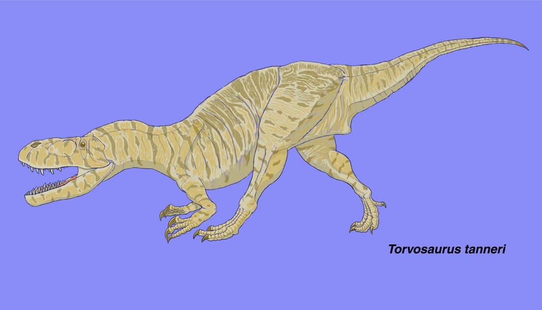 メガロサウルス科 - 肉食の系譜