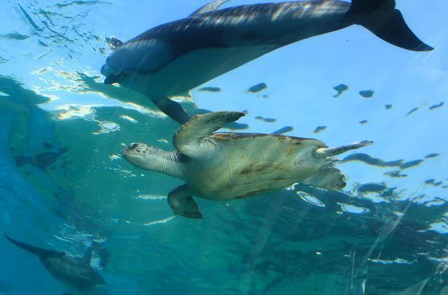 マリンガールの餌付けショー イルカショー カクレクマノミ 動画) ジンベイザメの館 トンネル水槽