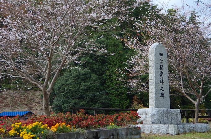 四季桜発祥の碑