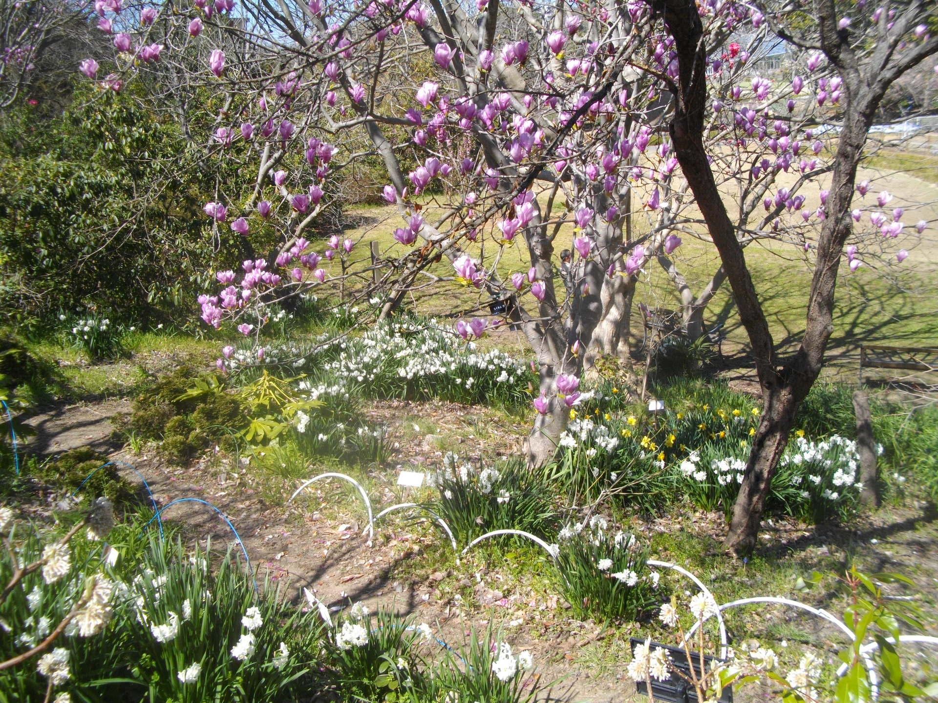春たけなわの鎌倉中央公園とフラ...