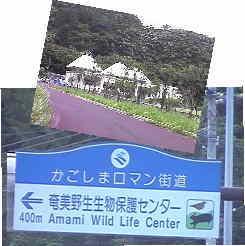040616-amamiyaseiseibutuhogo.jpg
