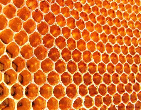 ミツバチの画像 p1_18