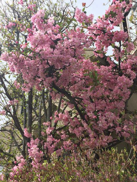 春たけなわ - ハナ家の日常