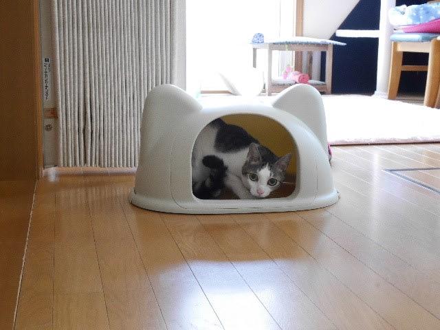 猫耳トイレ