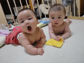 マユ、ぷにぷに・・。運動量の差かな ジャンル:ウェブログ コメント  うちのマメ子たち