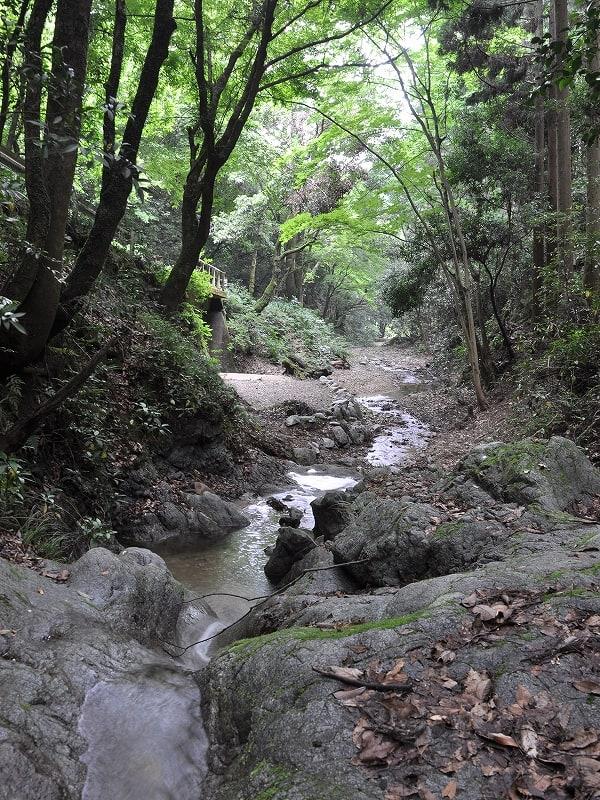 安佐谷の渓流