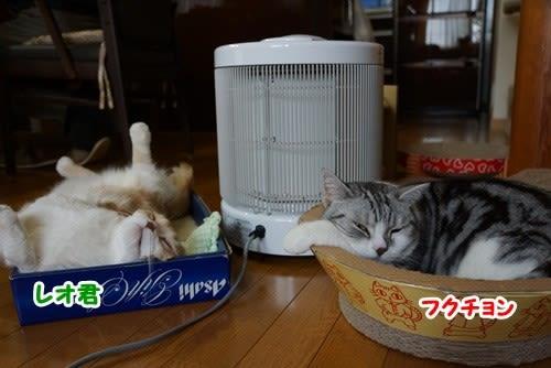 寒い日は猫達も眠たいよ~♪