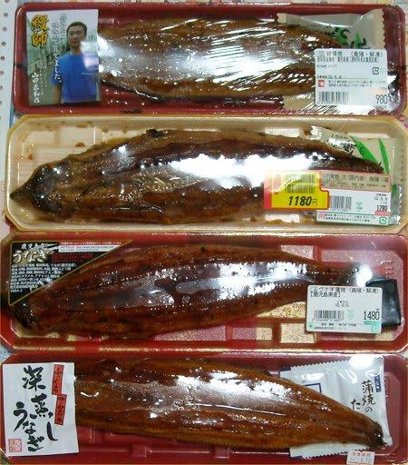 (新版)お魚と山と琵琶湖オオナマズの日々