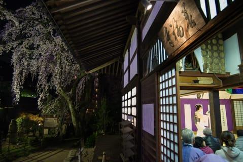 夜桜茶会のご案内