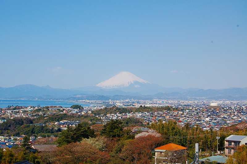 武家の古都.鎌倉山.桜と富士山撮影! - 老楽人生の部屋「私 ...