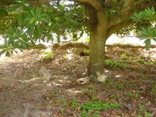 大久野島の画像 p1_1