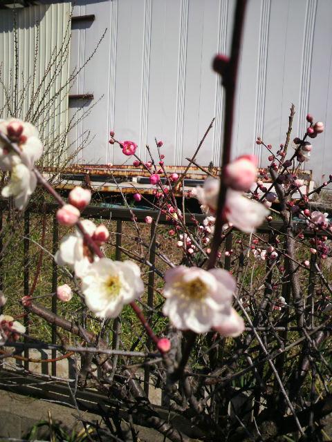 薬剤師作家・山村憲司のブログ