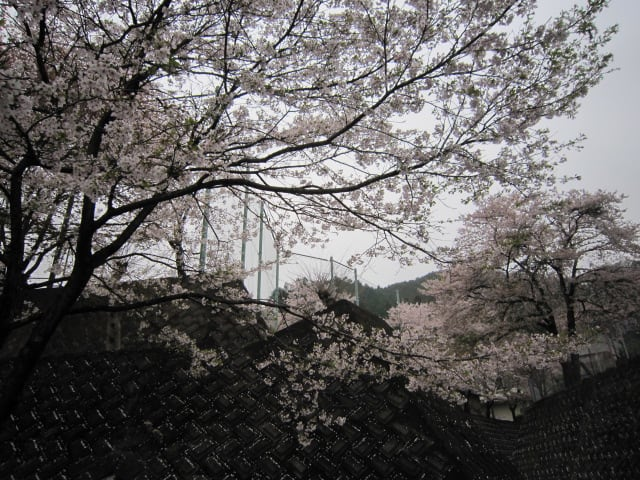 http://blogimg.goo.ne.jp/user_image/2f/4d/263087b9c0340a4327ff819e9e1655d3.jpg