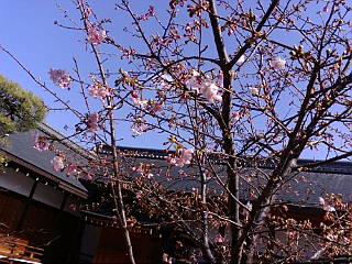 東寺、弘法市に来ています。