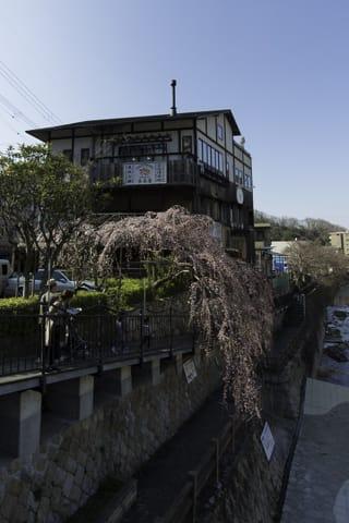 有馬温泉「吉高屋」さんの桜