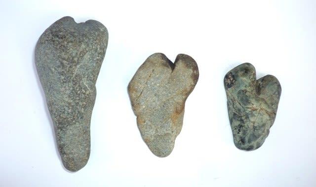 昭和年代に採集の五十鈴川産の「神足石」~ 左の最長標本のサイズ 約11cm