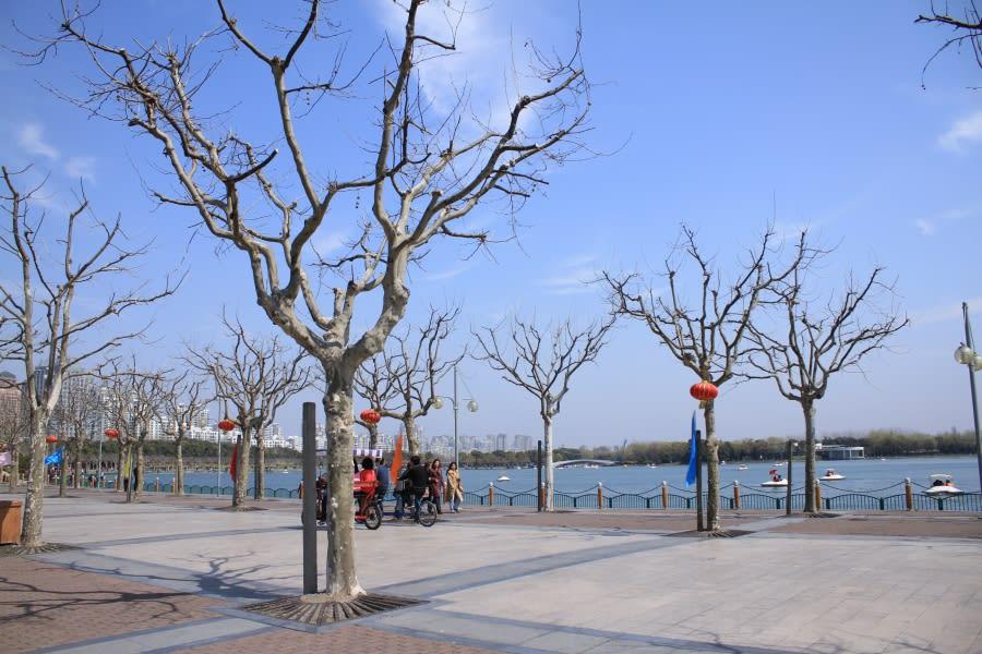 巨大人工池:上海世紀公園 ...