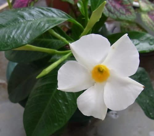 http://blog.goo.ne.jp/pasobo_koto/e/40924f14215ea74e15f73b98013ecd9a
