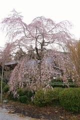 2015桜撮影計画