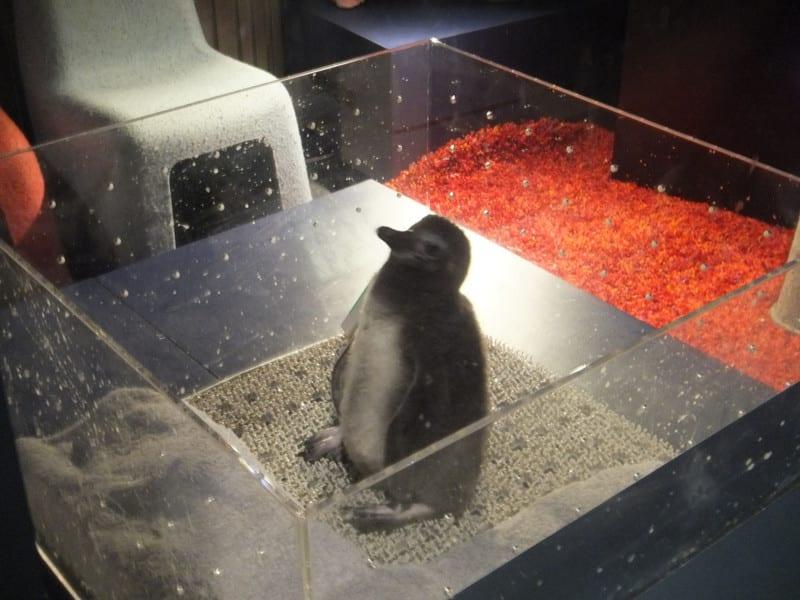 すみだ水族館で今年もペンギンの赤ちゃん誕生