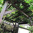 2011-6-4-19 ツル性植物