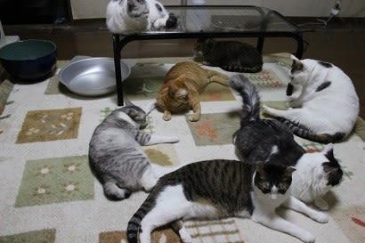 3月に2回目の家の子記念日を迎えていた元野良猫達