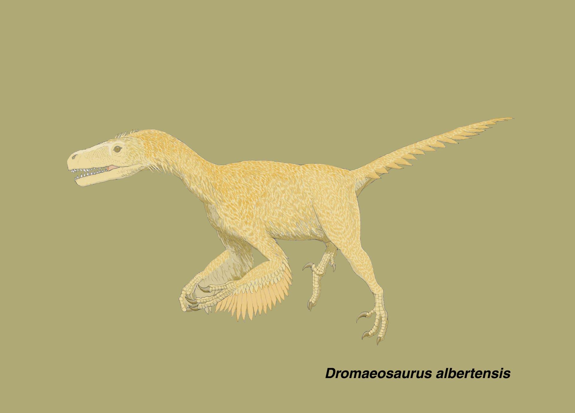 ドロマエオサウルス科」のブログ...