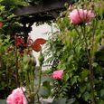 2006-5-28-3 思い出の初薔薇(名なし)