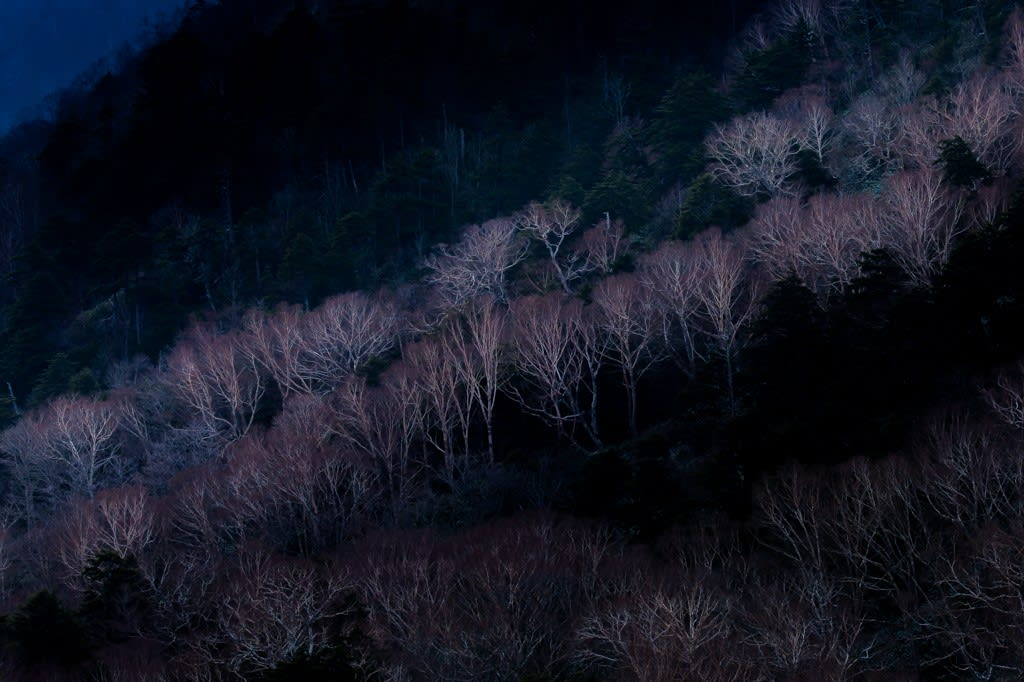 岳樺の風景写真