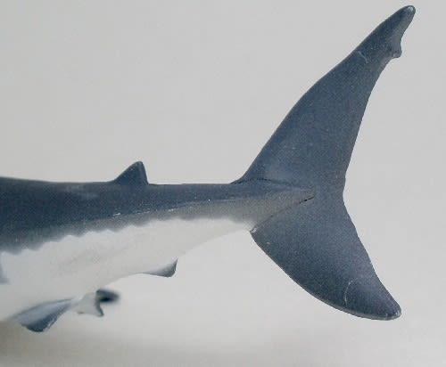 ホホジロザメの画像 p1_30