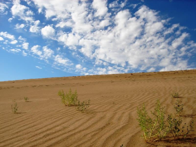 砂漠 そうそう