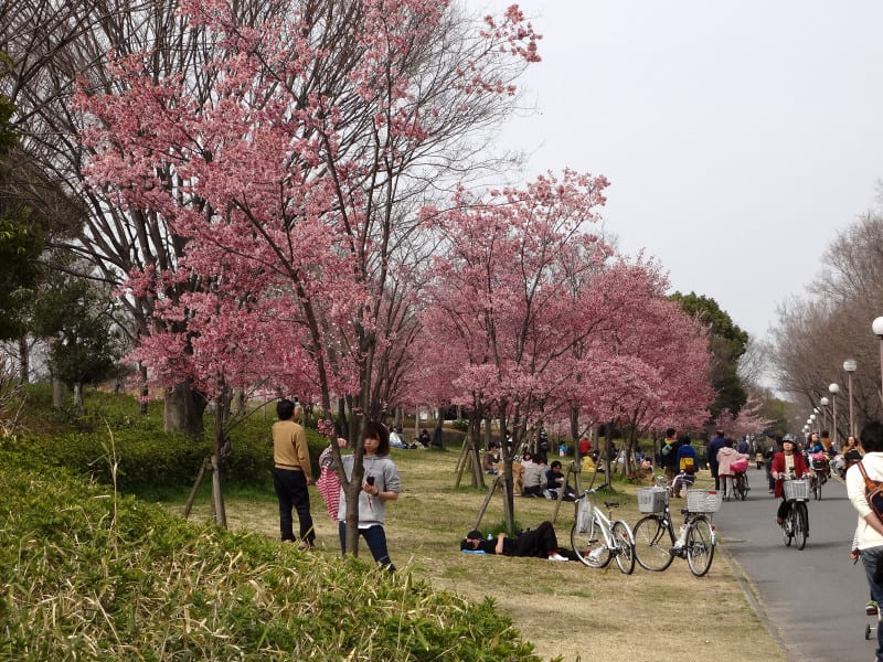 Under_plum_blossome_trees