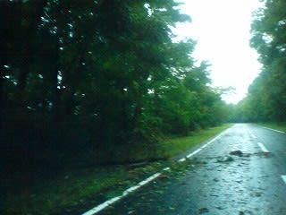 観光道路。松の枝や葉が落ちています。大きな倒木はなし。