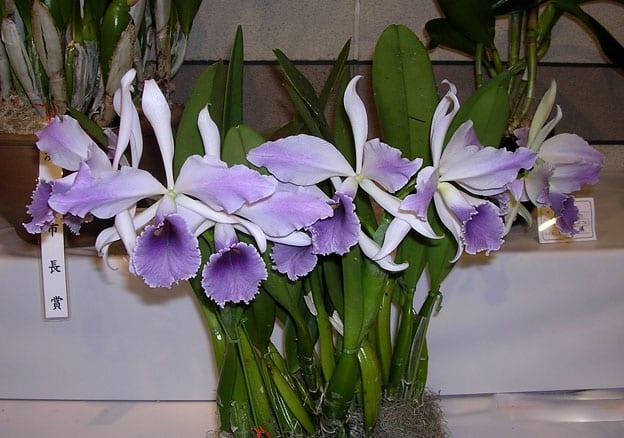 Растения из Тюмени. Краткий обзор - Страница 3 1579aaab98360ab0d650bcd3ea2b44d1