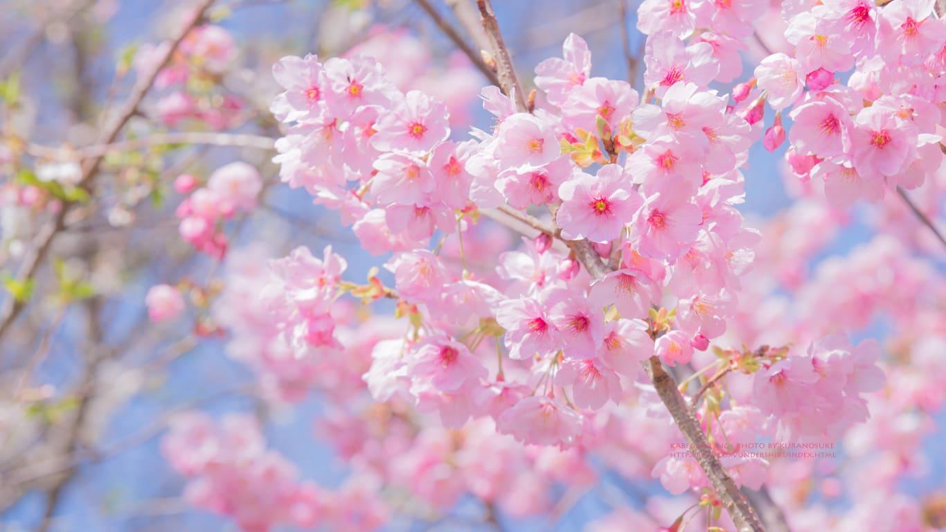 春の季節感を耳元に♡ : 耳元にも...