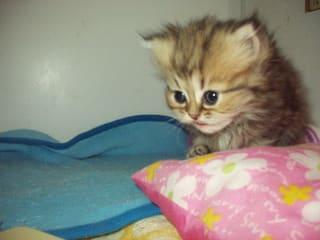小さめな子猫ちゃんで~す。