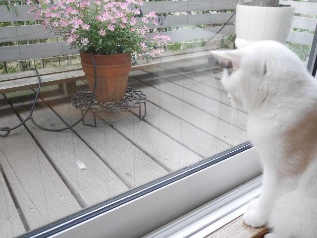 猫ってスゴイ!
