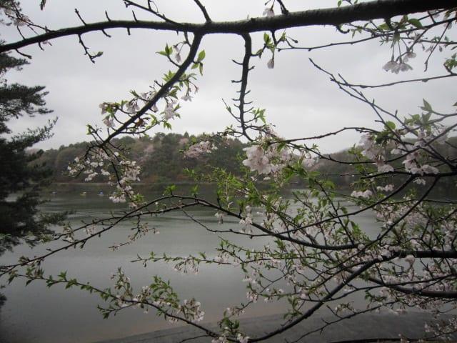 http://blogimg.goo.ne.jp/user_image/35/9b/a73646b64c6747fb97a21ba30aa7751e.jpg