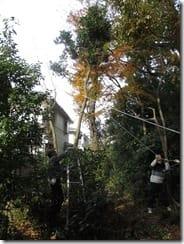 ③住宅に近い高木の伐採