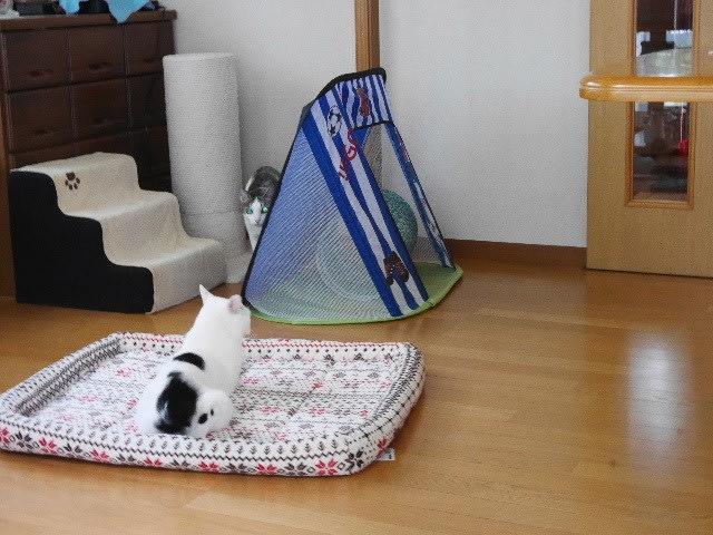 猫団子の準備OK!