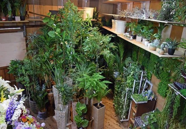 東京堂 magiq 人工観葉植物 展示