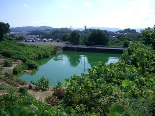 宿舎の下にある鎌田池